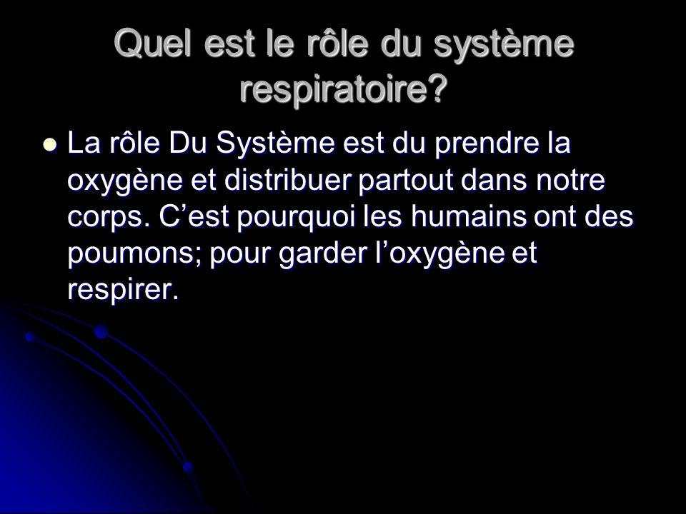 Quel est le rôle du système respiratoire