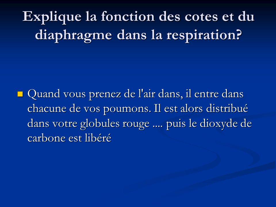 Explique la fonction des cotes et du diaphragme dans la respiration
