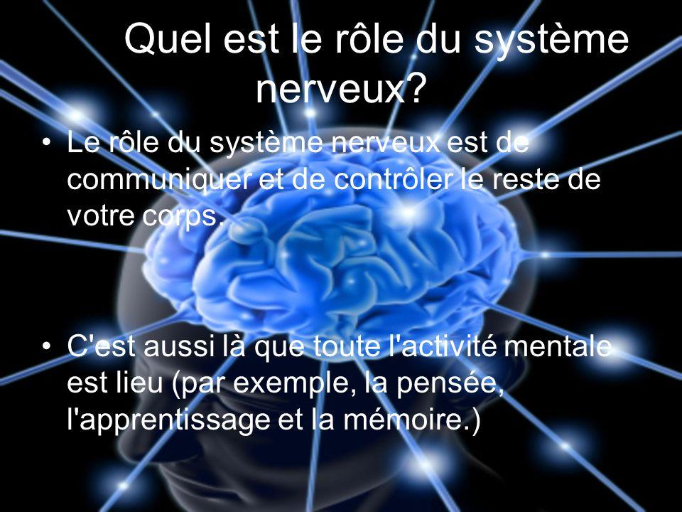 Quel est le rôle du système nerveux