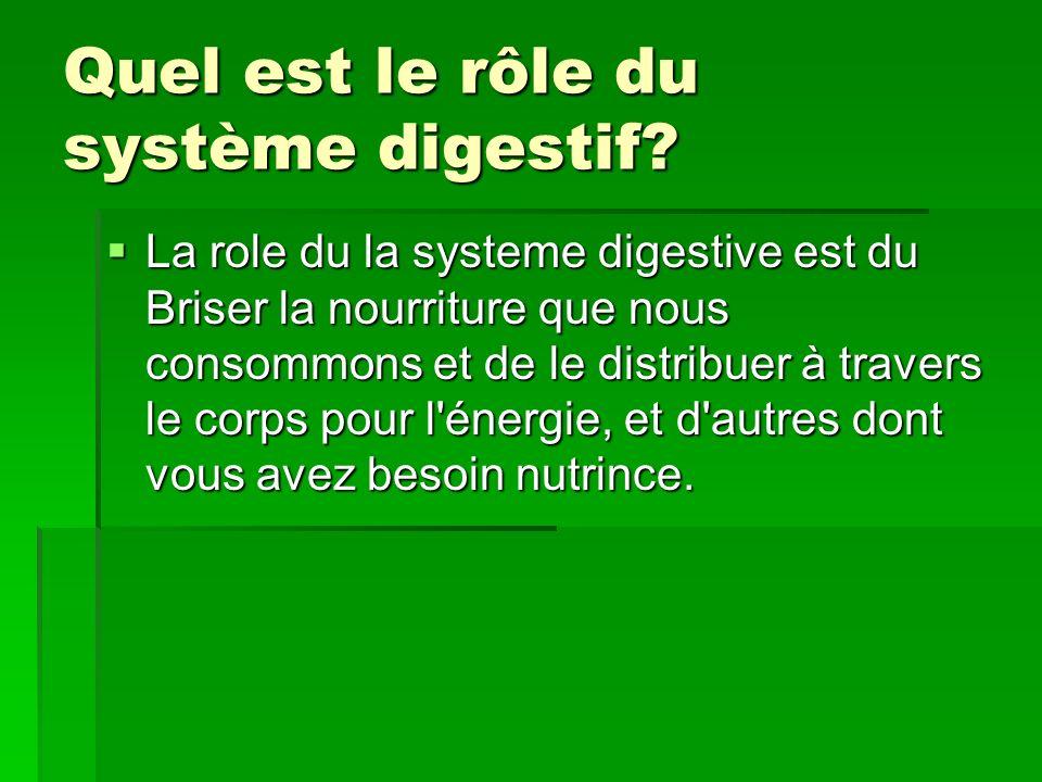 Quel est le rôle du système digestif