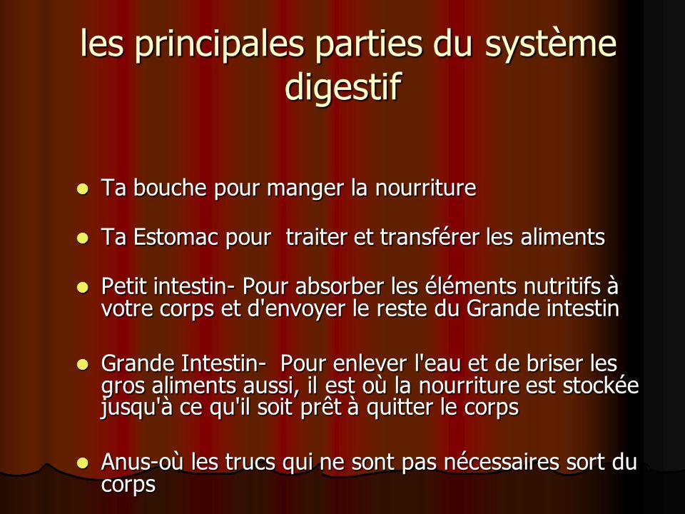 les principales parties du système digestif