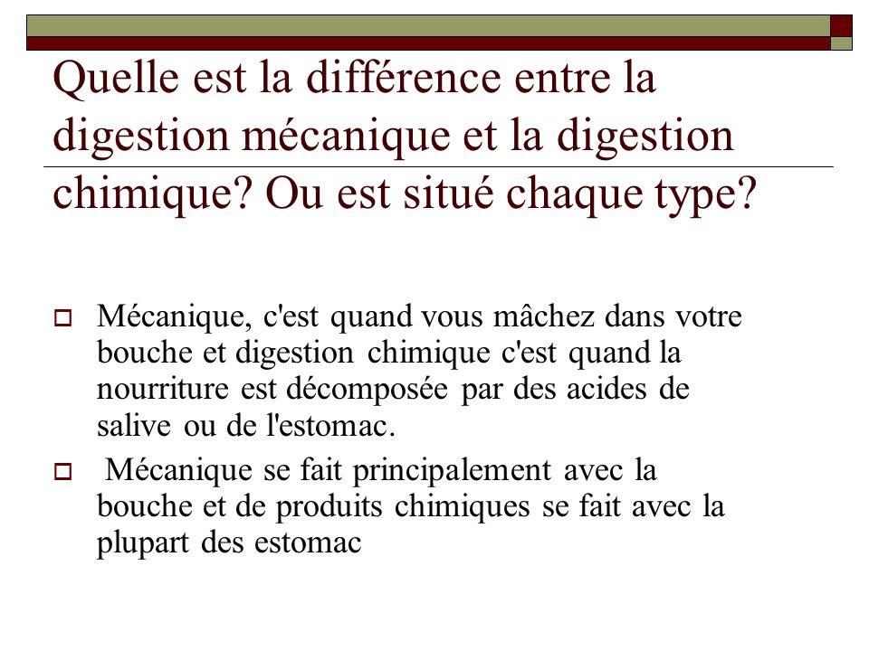 Quelle est la différence entre la digestion mécanique et la digestion chimique Ou est situé chaque type