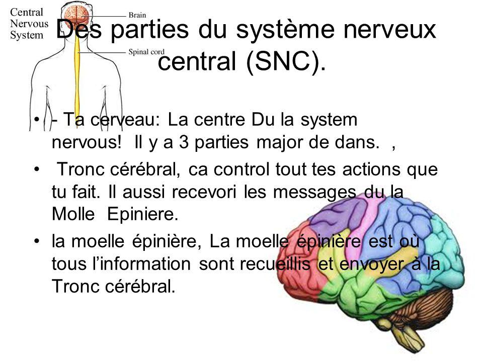 Des parties du système nerveux central (SNC).