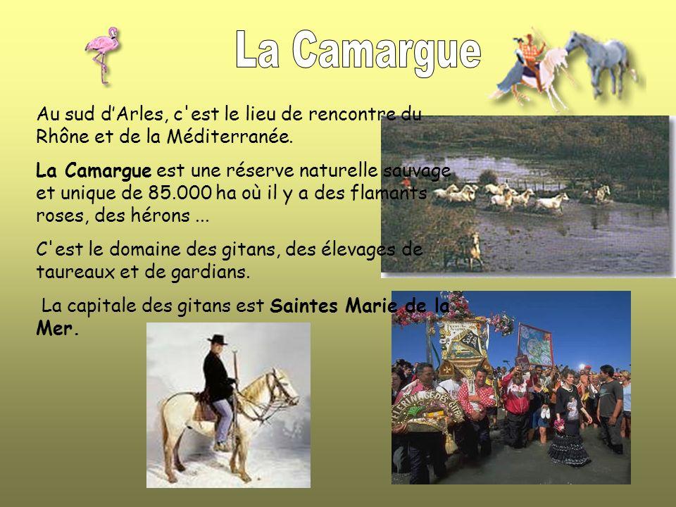 La Camargue Au sud d'Arles, c est le lieu de rencontre du Rhône et de la Méditerranée.