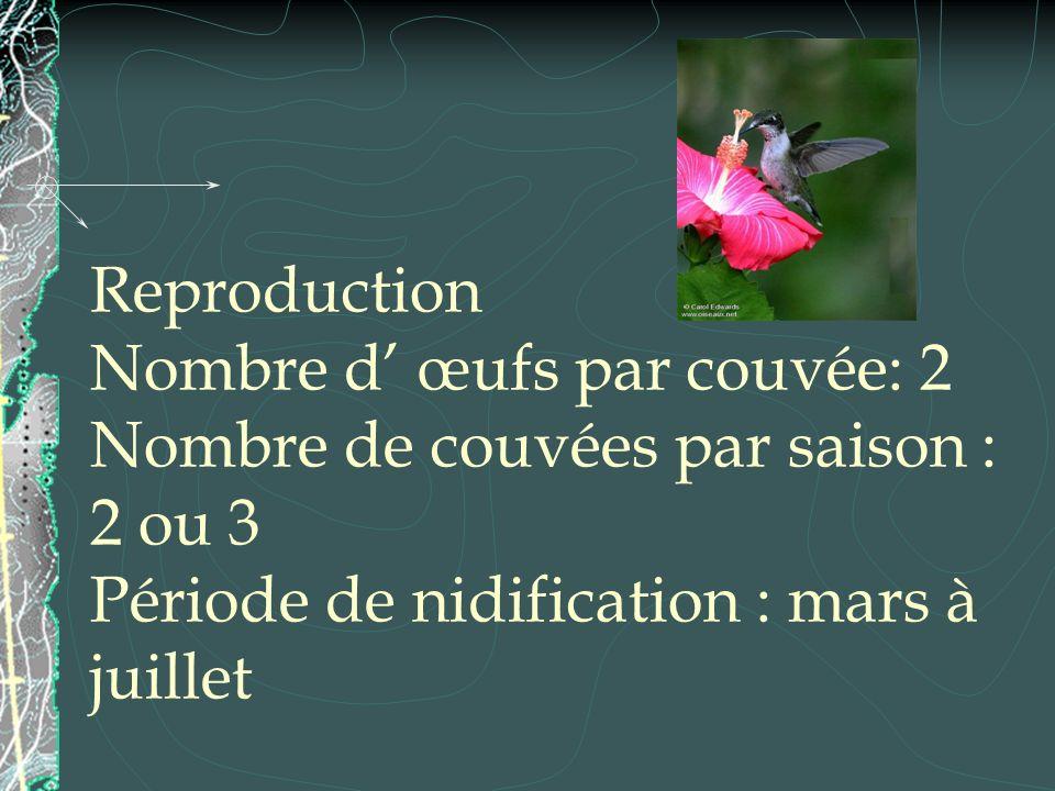 Reproduction Nombre d' œufs par couvée: 2 Nombre de couvées par saison : 2 ou 3 Période de nidification : mars à juillet