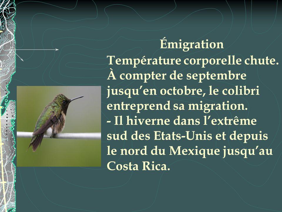 Émigration Température corporelle chute