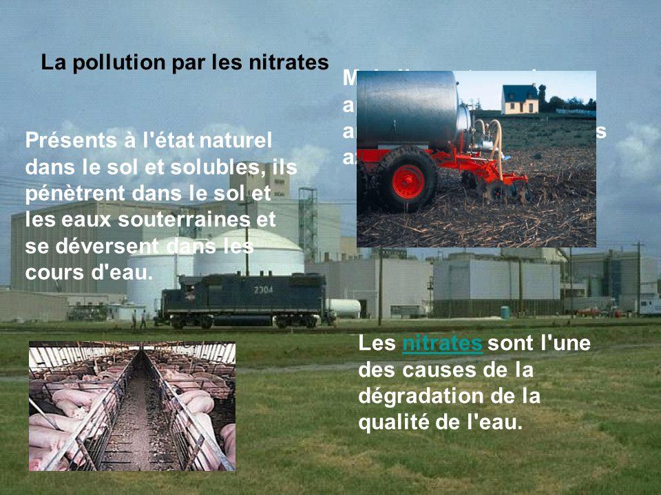 La pollution par les nitrates