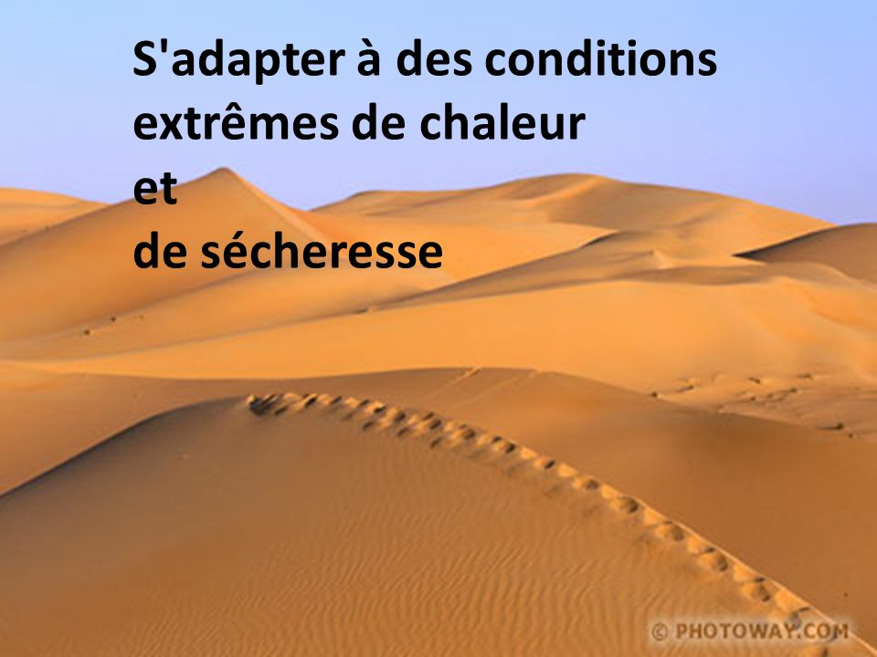 S adapter à des conditions