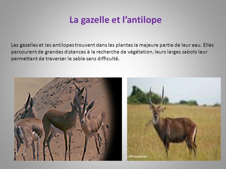 La gazelle et l'antilope