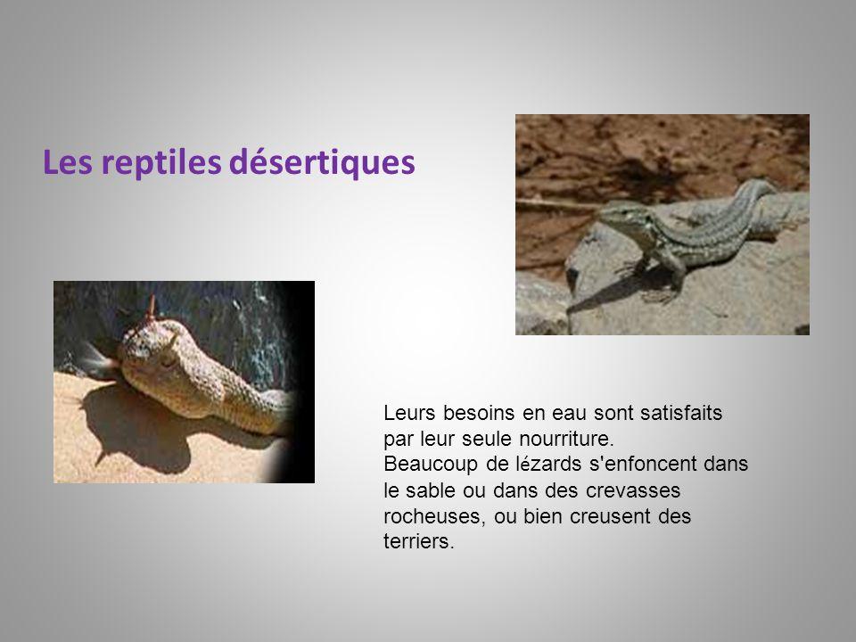 Les reptiles désertiques