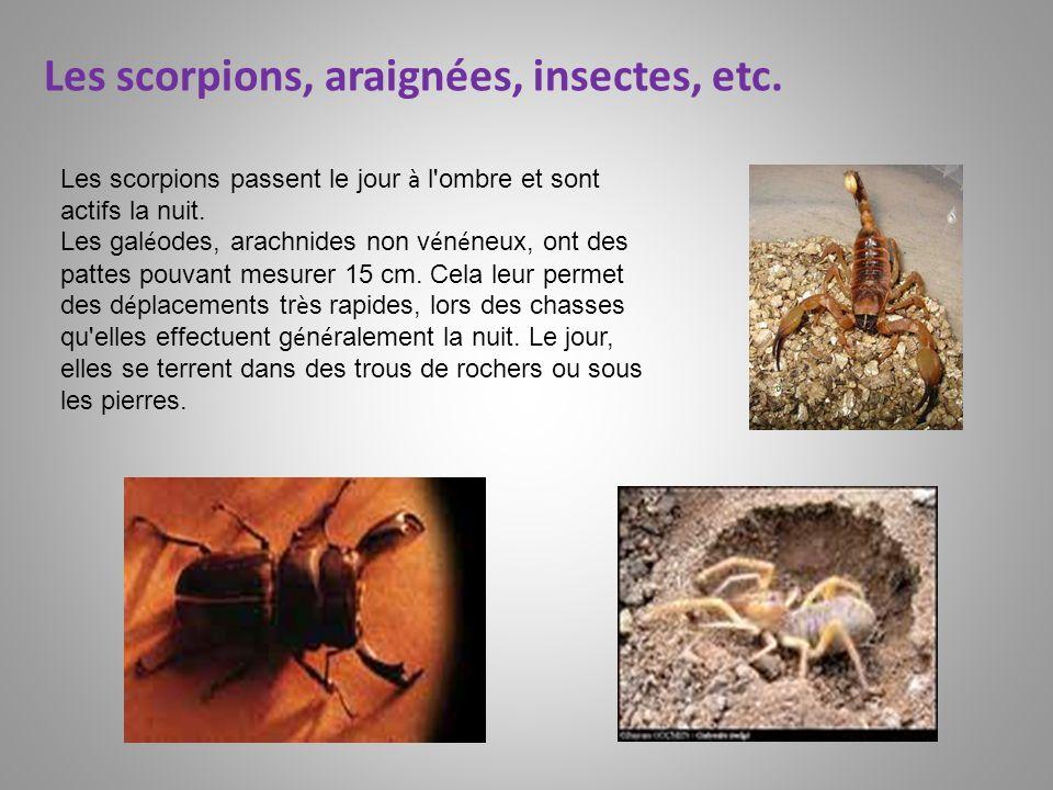 Les scorpions, araignées, insectes, etc.