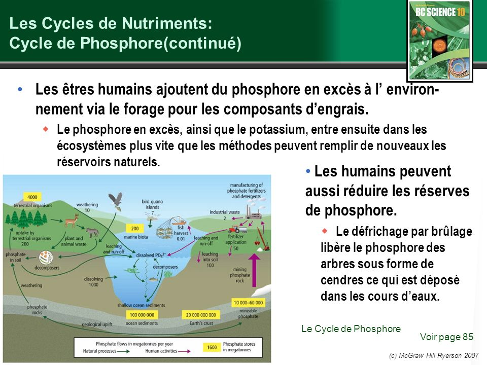 Les Cycles de Nutriments: Cycle de Phosphore(continué)