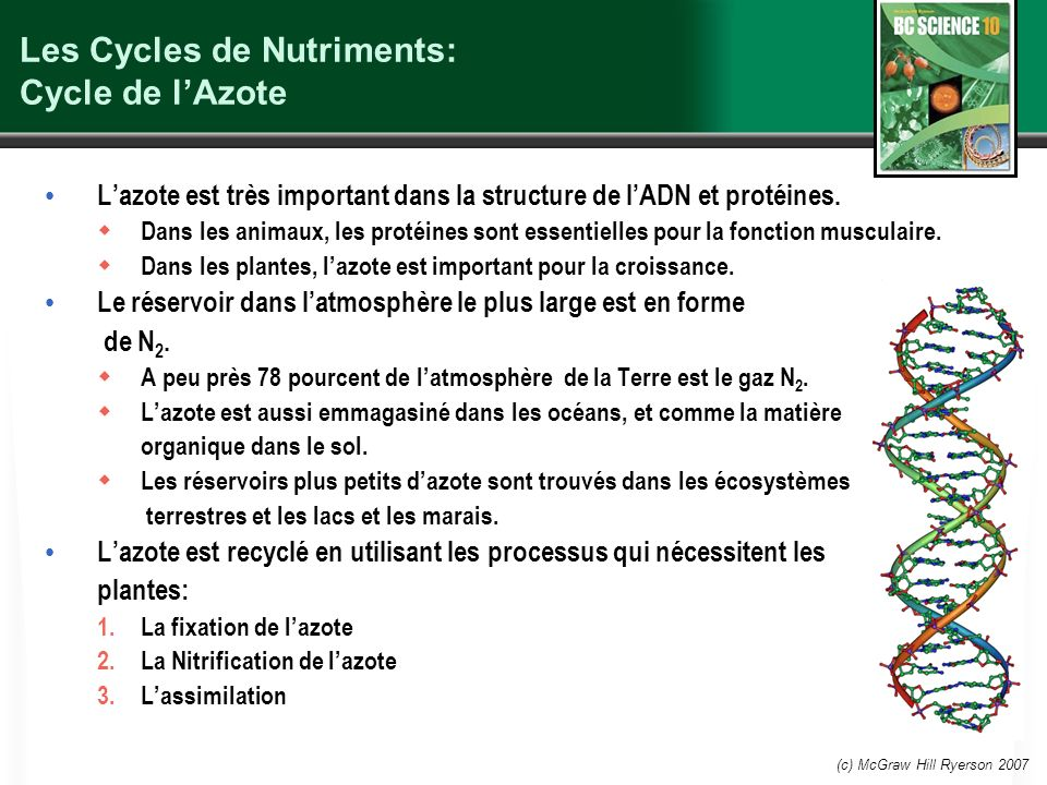 Les Cycles de Nutriments: Cycle de l'Azote