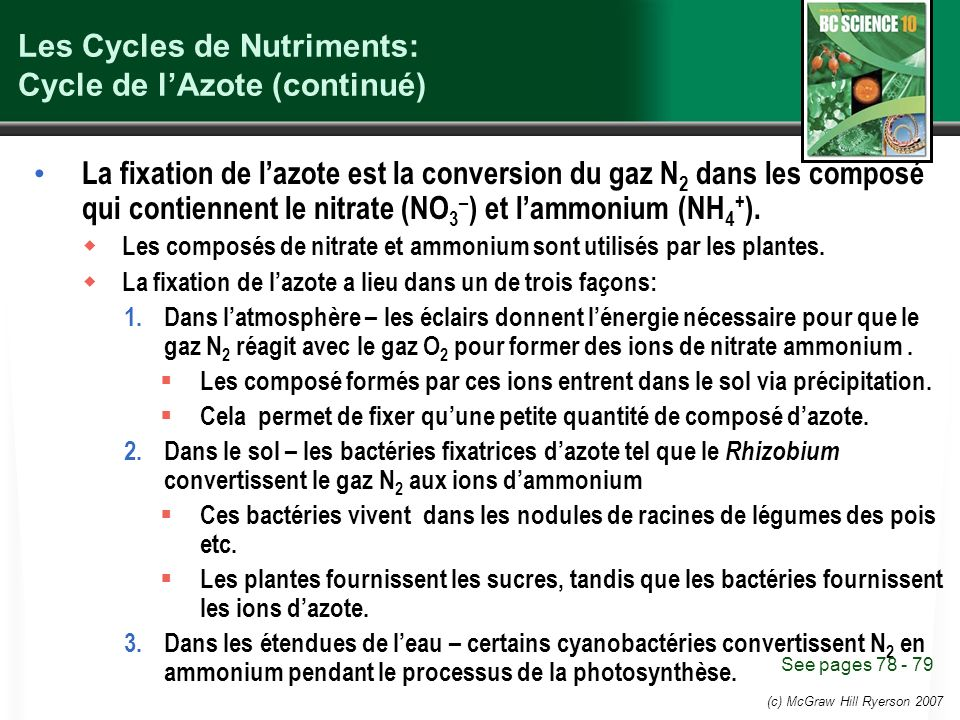 Les Cycles de Nutriments: Cycle de l'Azote (continué)
