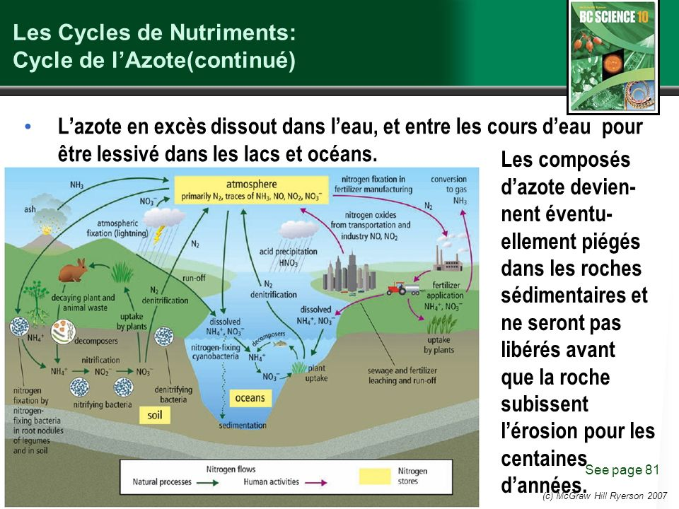Les Cycles de Nutriments: Cycle de l'Azote(continué)