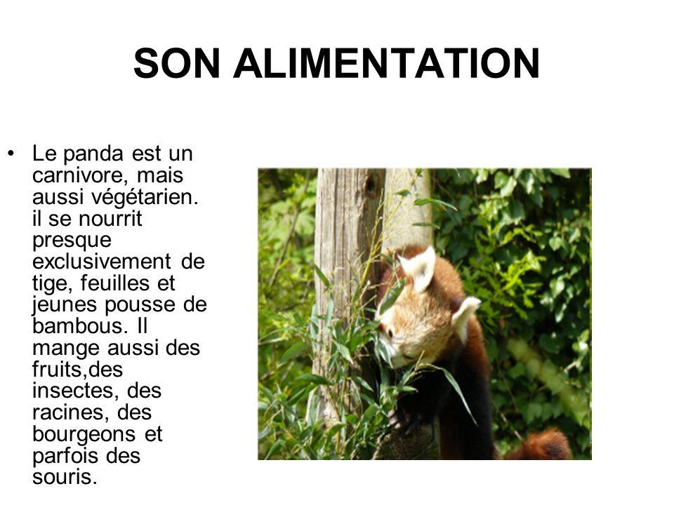 SON ALIMENTATION