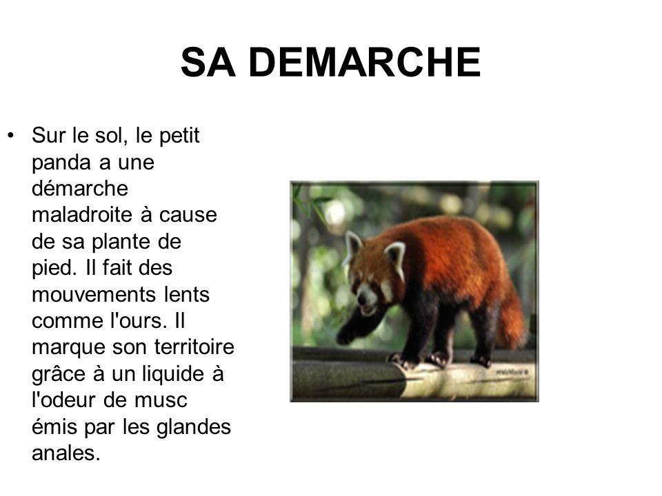 SA DEMARCHE