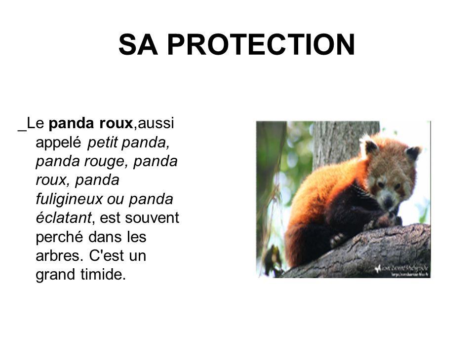 SA PROTECTION