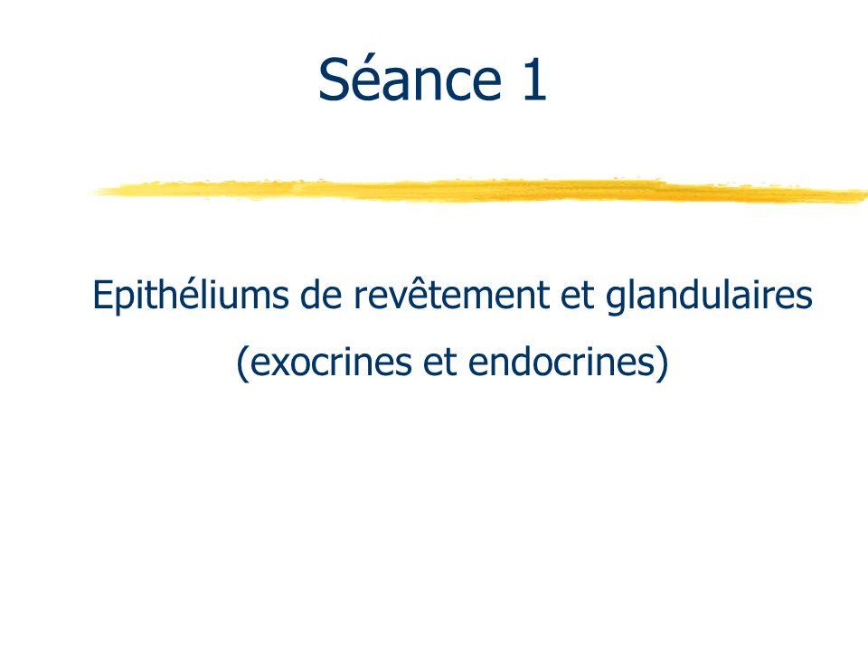 Epithéliums de revêtement et glandulaires (exocrines et endocrines)