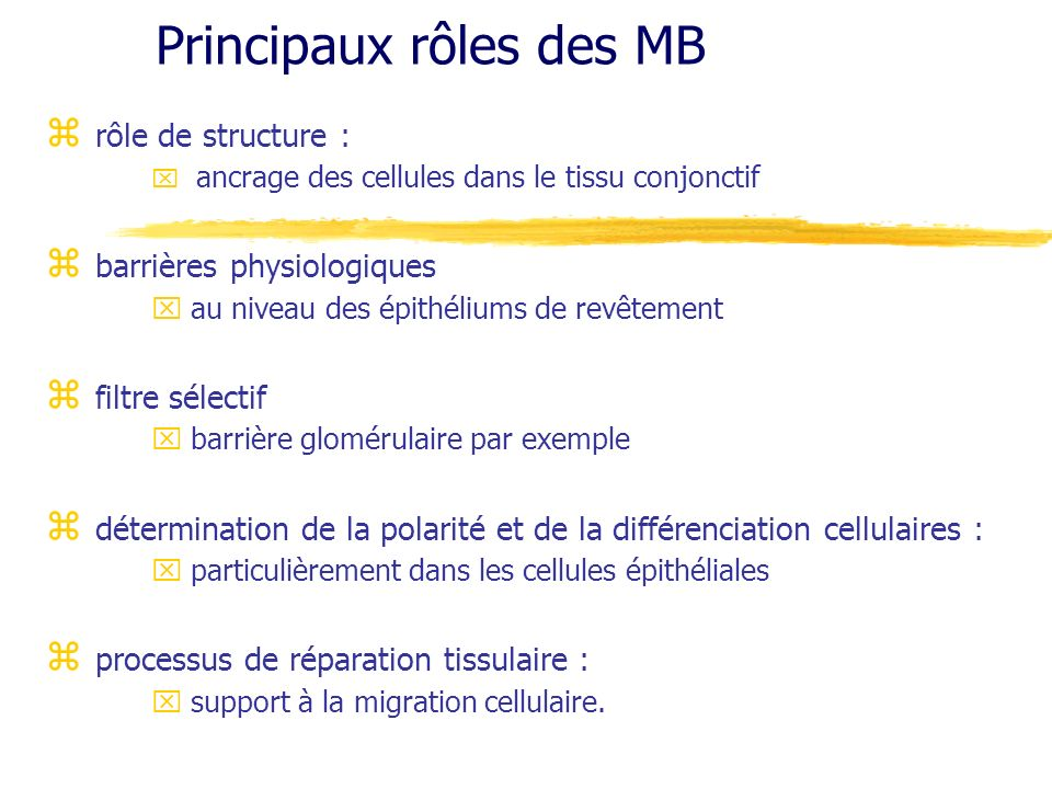 Principaux rôles des MB