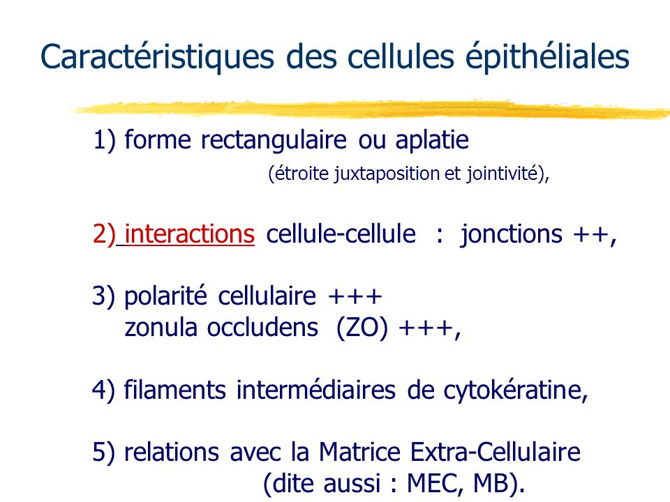 Caractéristiques des cellules épithéliales
