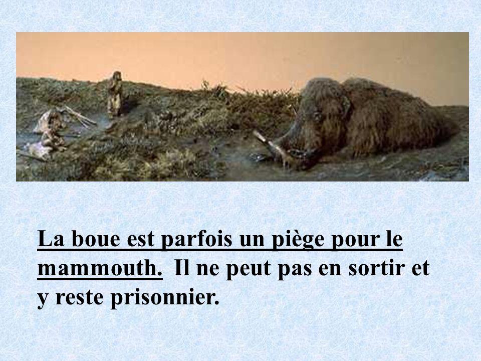 La boue est parfois un piège pour le mammouth
