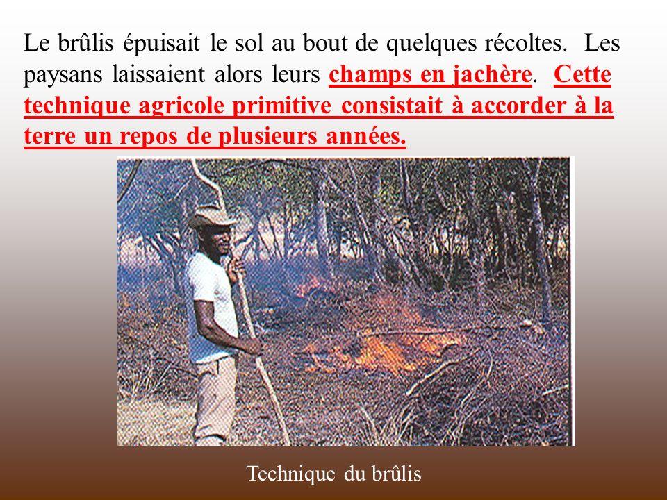 Le brûlis épuisait le sol au bout de quelques récoltes