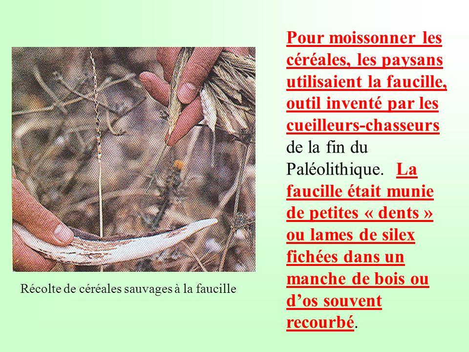 Pour moissonner les céréales, les paysans utilisaient la faucille, outil inventé par les cueilleurs-chasseurs de la fin du Paléolithique. La faucille était munie de petites « dents » ou lames de silex fichées dans un manche de bois ou d'os souvent recourbé.