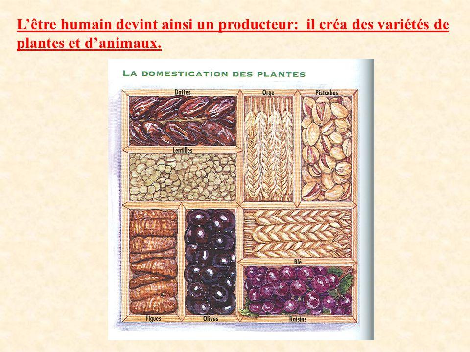 L'être humain devint ainsi un producteur: il créa des variétés de plantes et d'animaux.