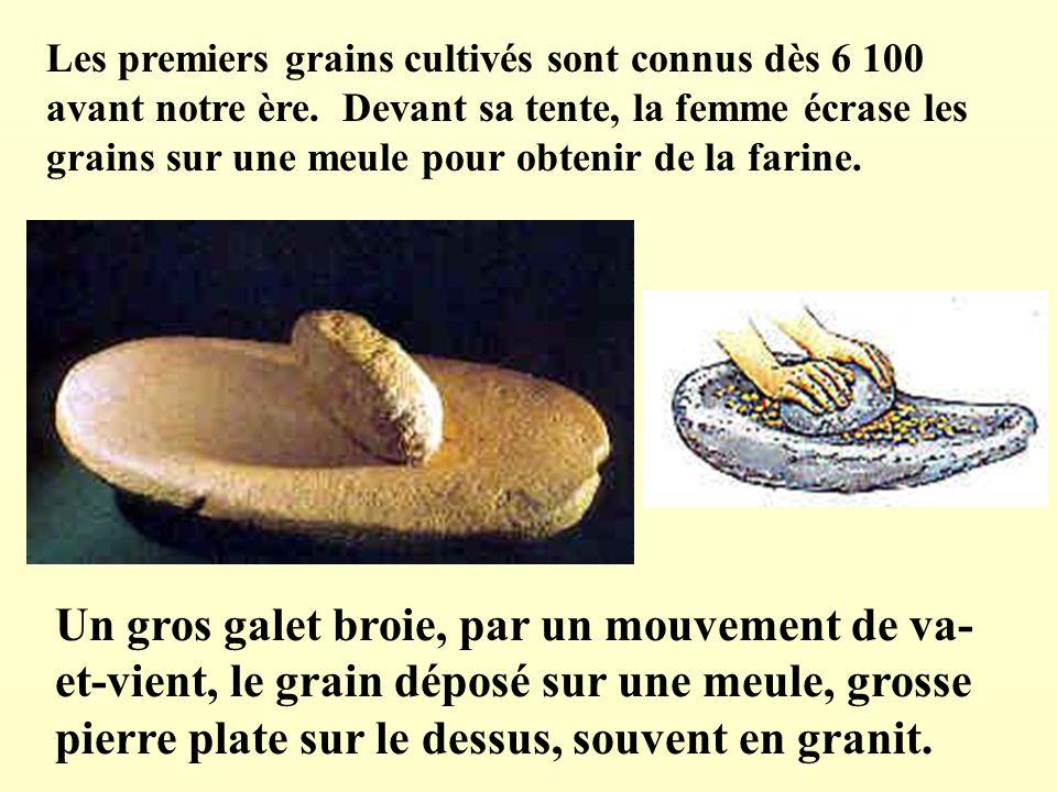 Les premiers grains cultivés sont connus dès 6 100 avant notre ère