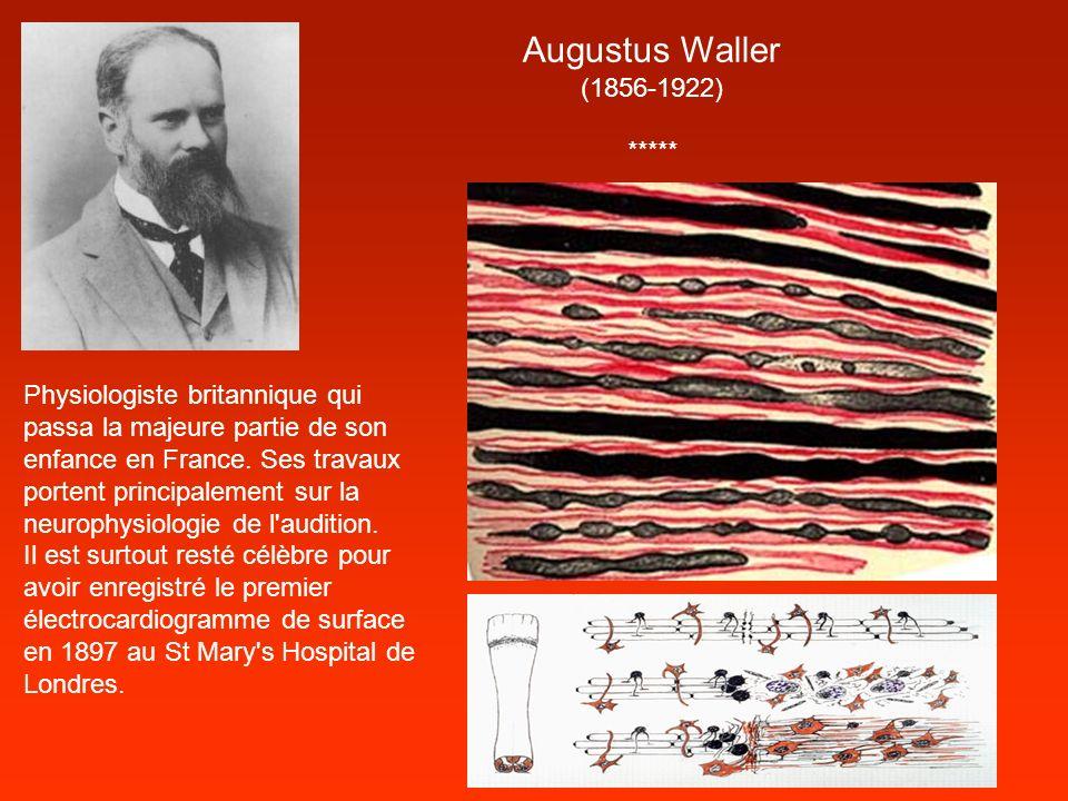 Augustus Waller (1856-1922) *****
