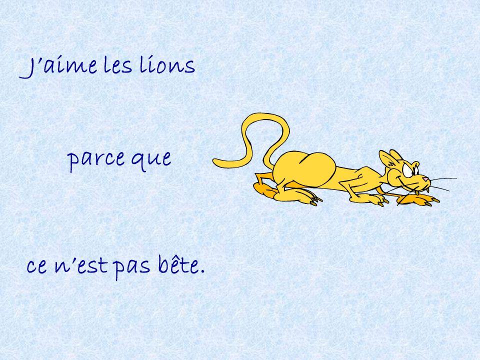 J'aime les lions parce que ce n'est pas bête.