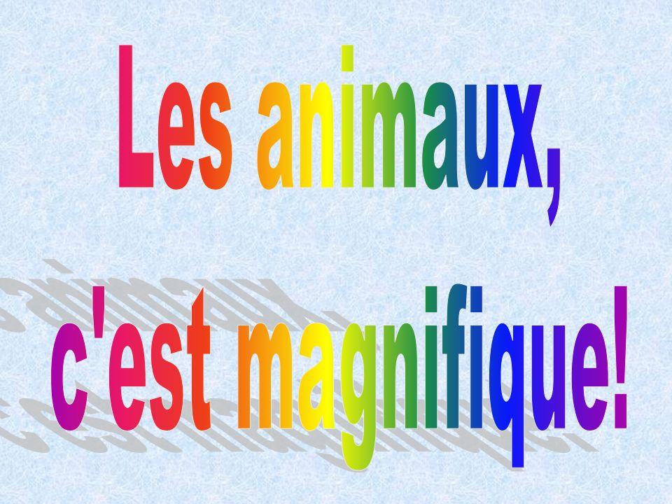 Les animaux, c est magnifique!