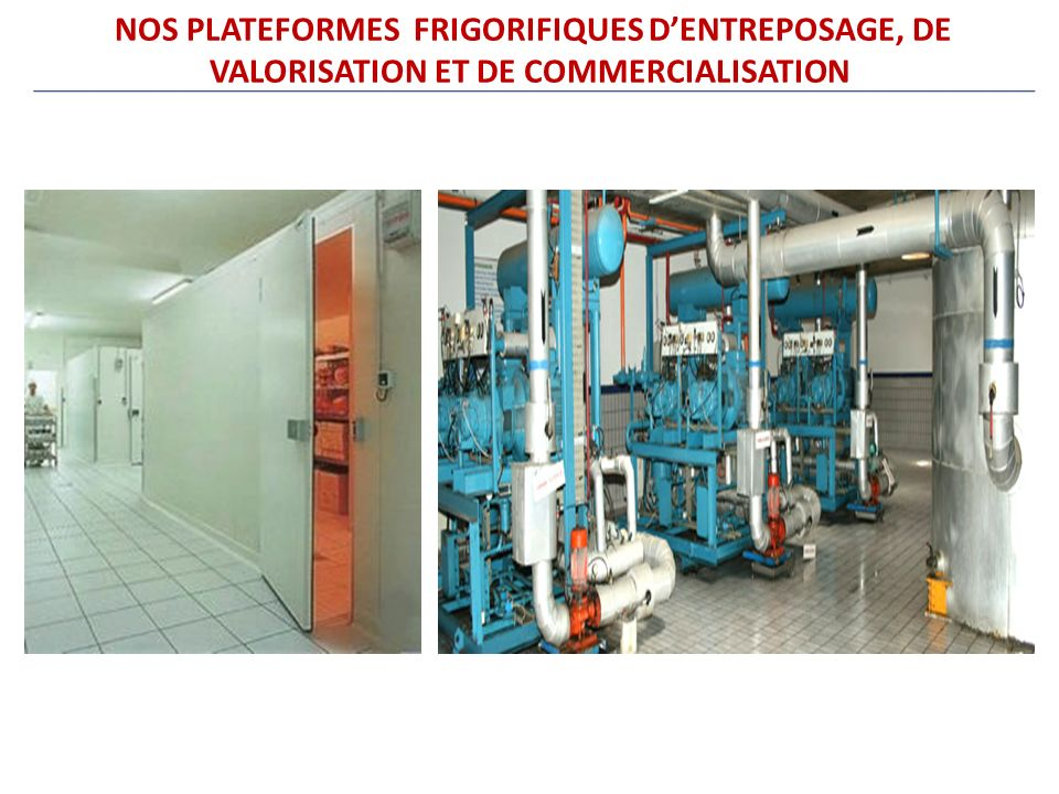 NOS PLATEFORMES FRIGORIFIQUES D'ENTREPOSAGE, DE VALORISATION ET DE COMMERCIALISATION