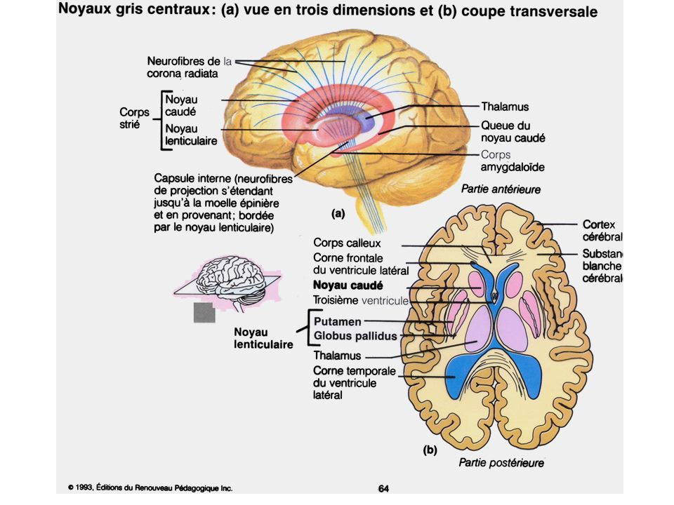 buy cognitive behavioural processes across psychological disorders