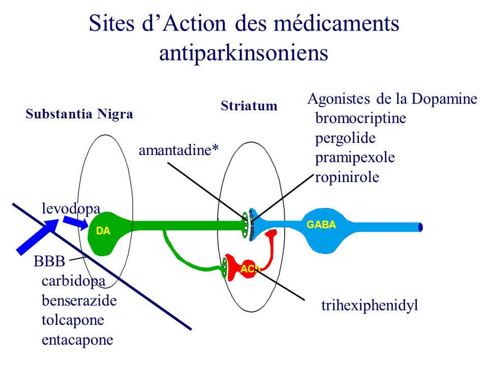 Sites d'Action des médicaments antiparkinsoniens