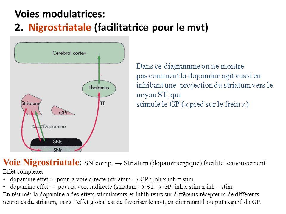 Voies modulatrices: 2. Nigrostriatale (facilitatrice pour le mvt)