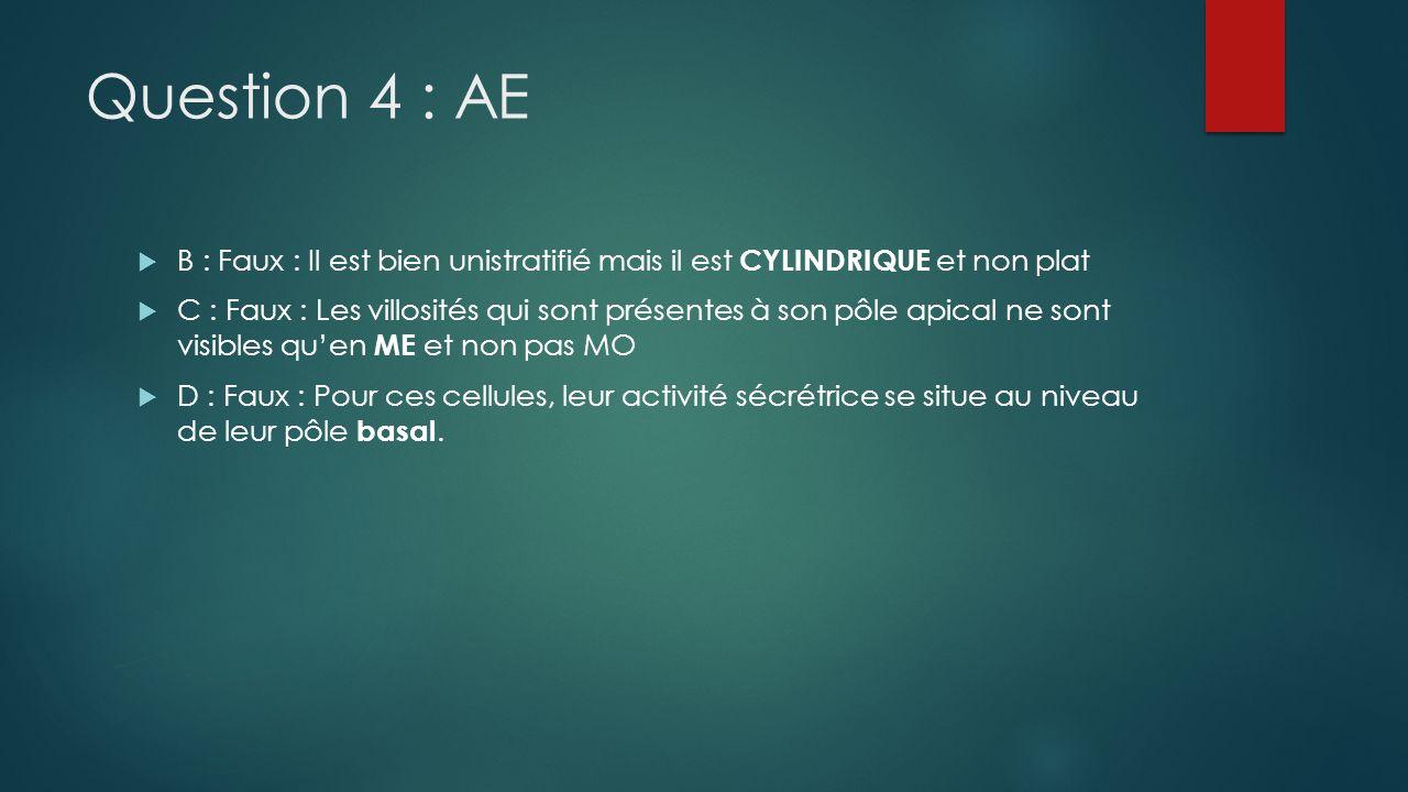 Question 4 : AE B : Faux : Il est bien unistratifié mais il est CYLINDRIQUE et non plat.
