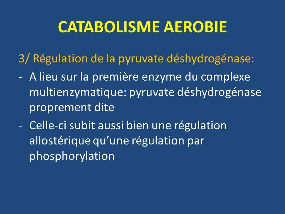 CATABOLISME AEROBIE 3/ Régulation de la pyruvate déshydrogénase: