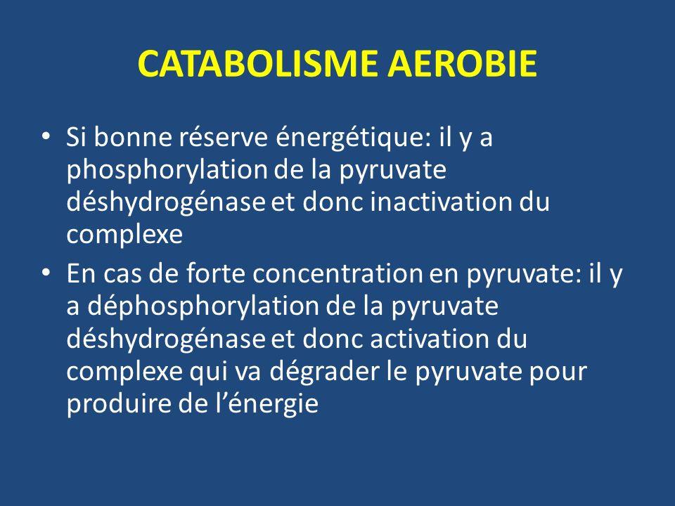 CATABOLISME AEROBIE Si bonne réserve énergétique: il y a phosphorylation de la pyruvate déshydrogénase et donc inactivation du complexe.