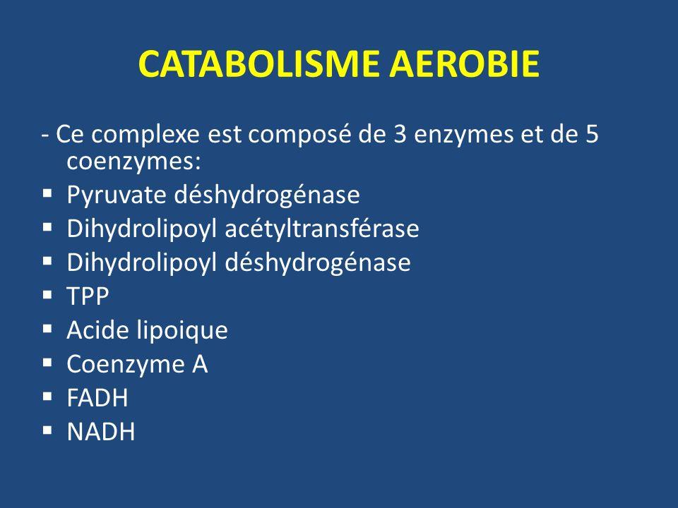 CATABOLISME AEROBIE - Ce complexe est composé de 3 enzymes et de 5 coenzymes: Pyruvate déshydrogénase.