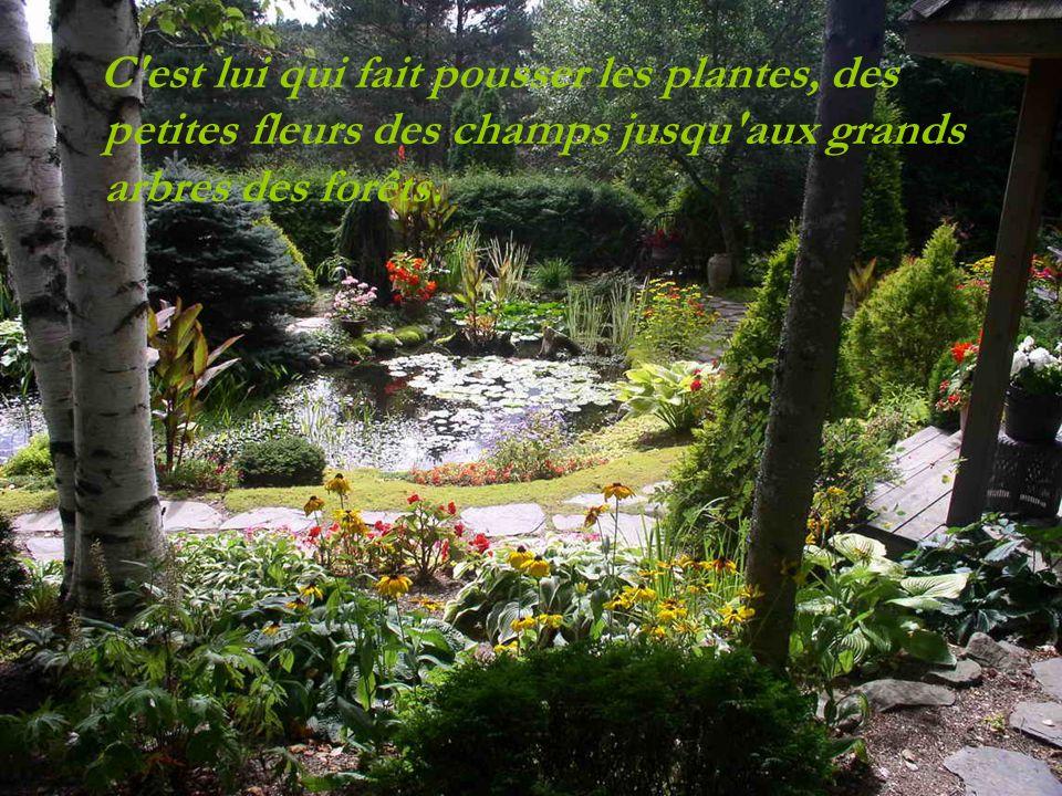 C est lui qui fait pousser les plantes, des petites fleurs des champs jusqu aux grands arbres des forêts.