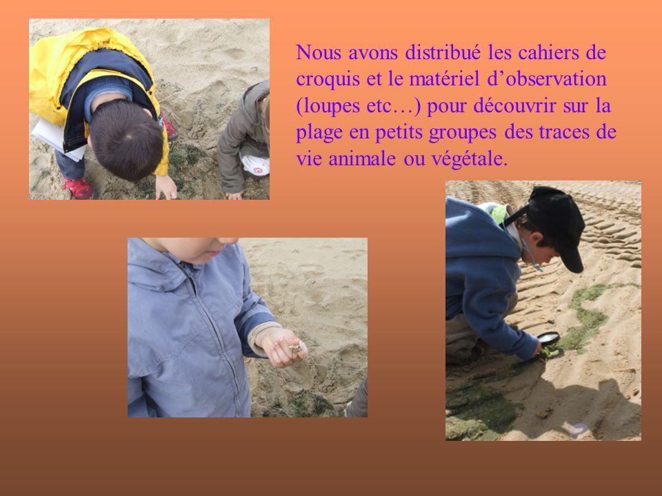 Nous avons distribué les cahiers de croquis et le matériel d'observation (loupes etc…) pour découvrir sur la plage en petits groupes des traces de vie animale ou végétale.