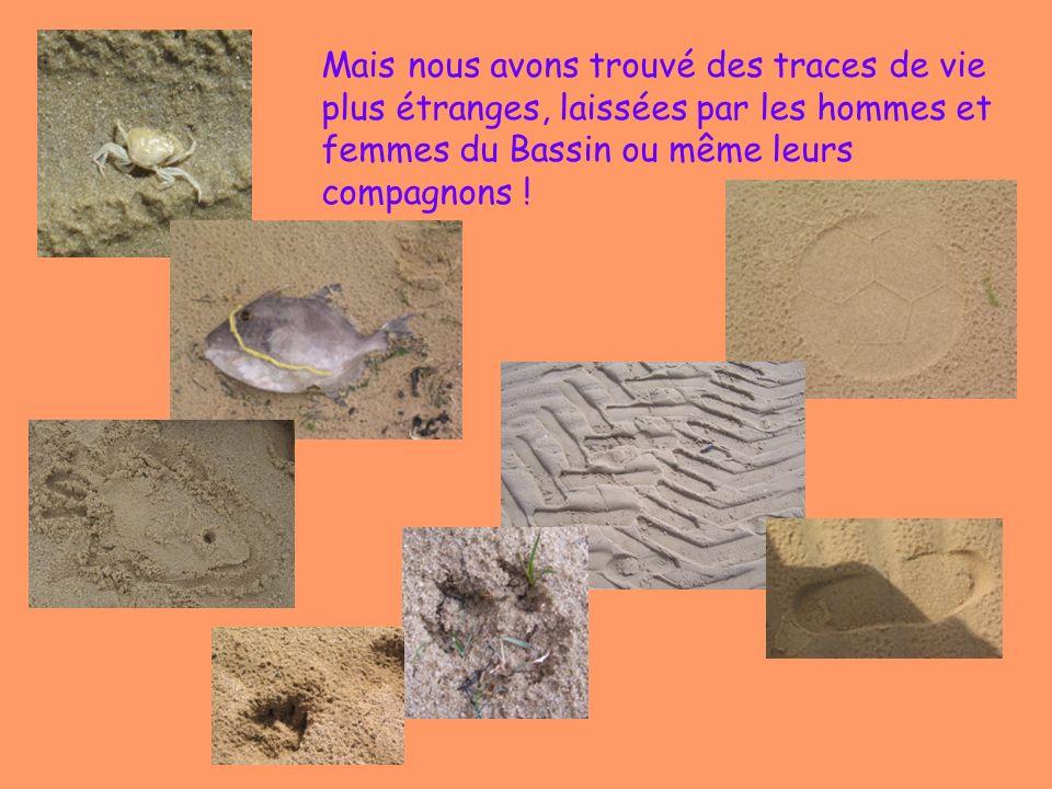 Mais nous avons trouvé des traces de vie plus étranges, laissées par les hommes et femmes du Bassin ou même leurs compagnons !