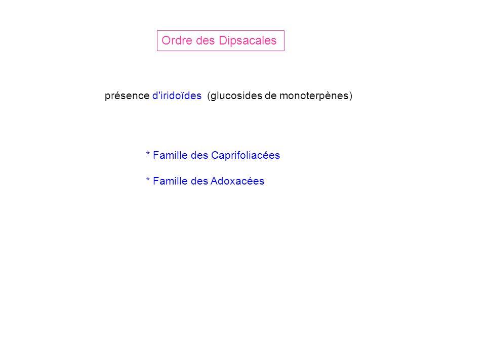 Ordre des Dipsacales présence d iridoïdes (glucosides de monoterpènes)