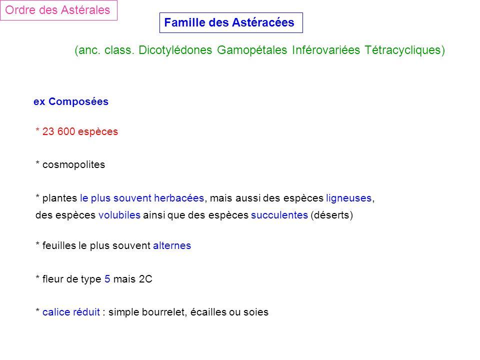 Famille des Astéracées