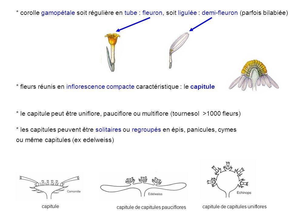 ou même capitules (ex edelweiss)