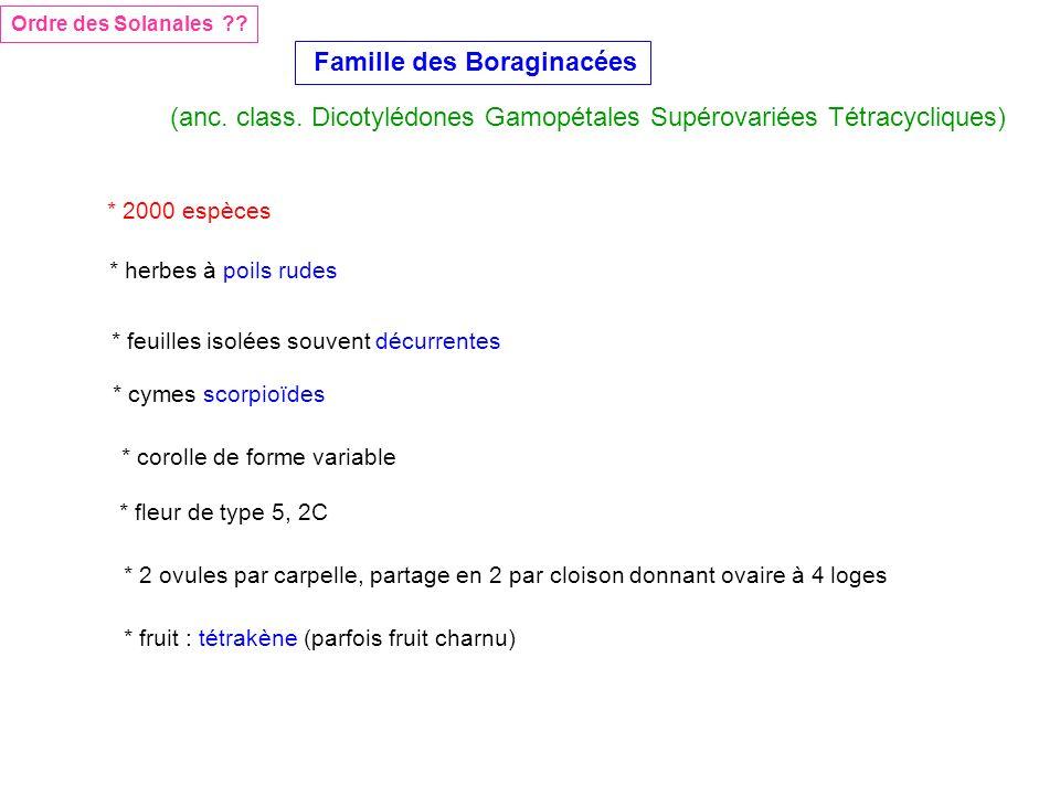 Famille des Boraginacées