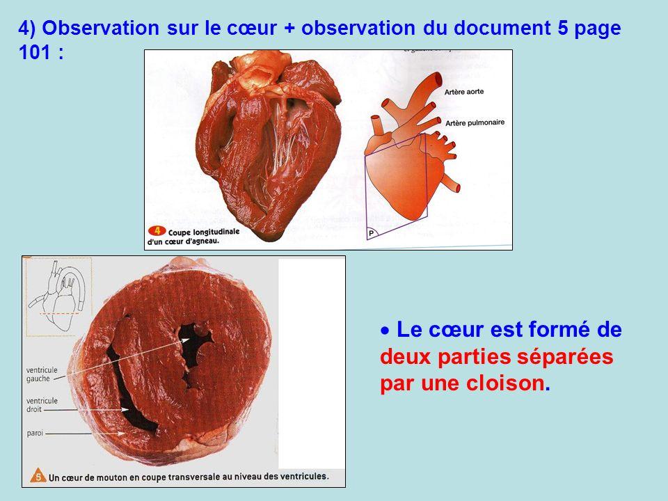Le cœur est formé de deux parties séparées par une cloison.