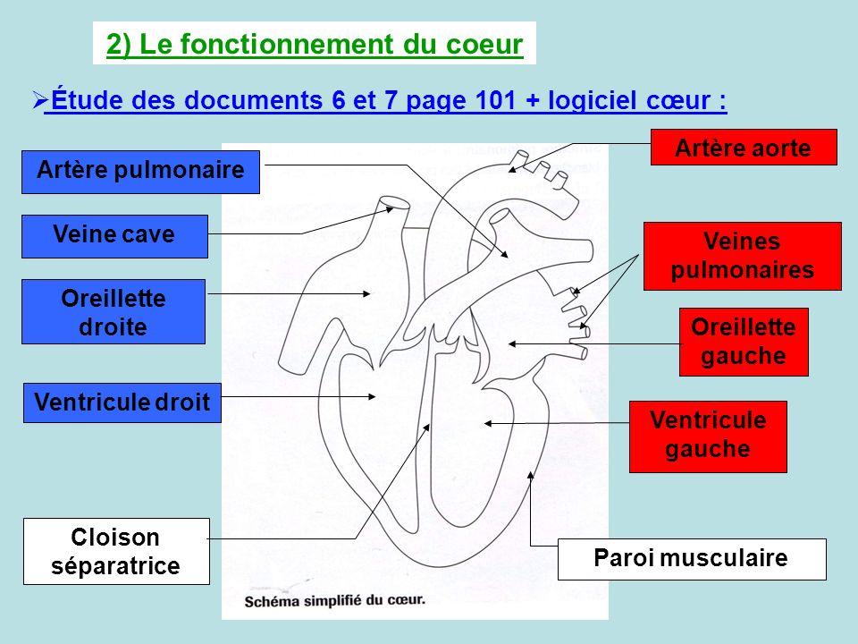 2) Le fonctionnement du coeur